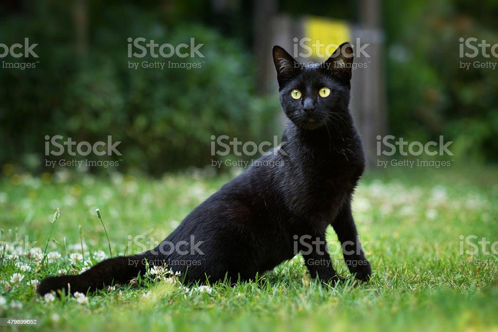Cute black kitten outdoors stock photo