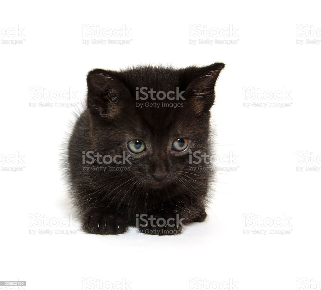 Cute black kitten stock photo