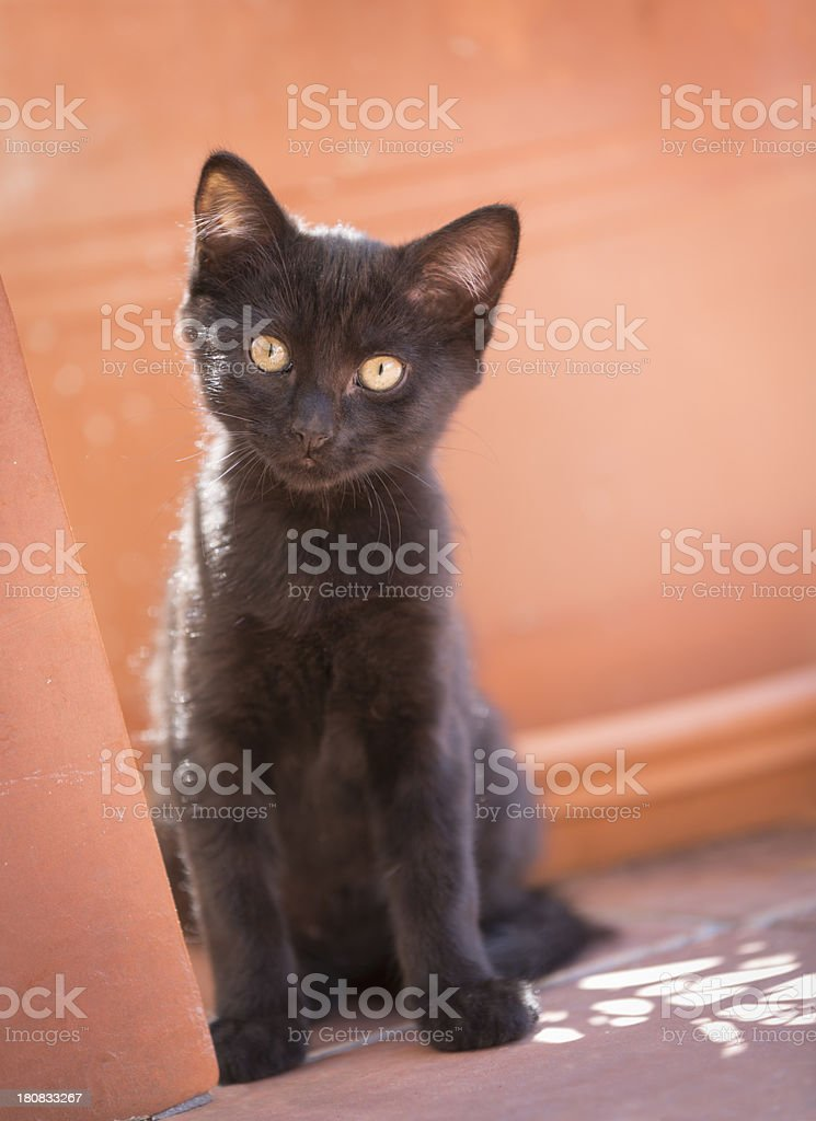 Cute black kitten playing by the plant pots royalty-free stock photo