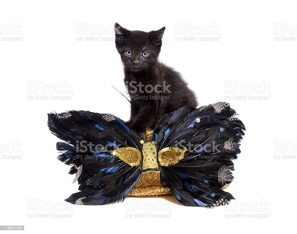 Cute Black Kitten Sitting With Mask royalty-free stock photo