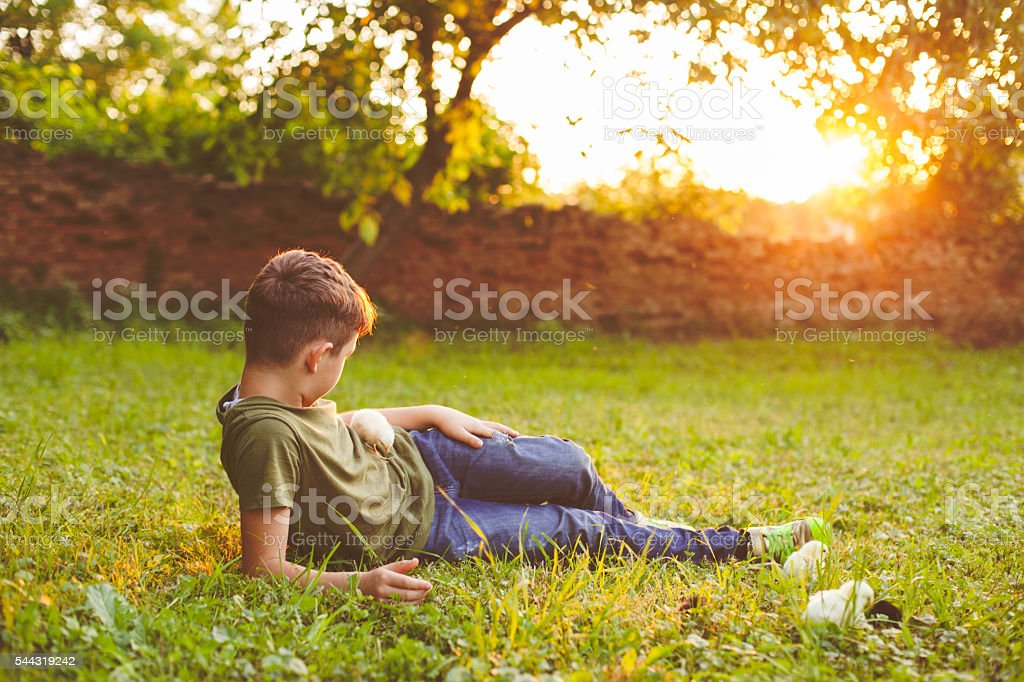 Cute boy and baby chicks stock photo