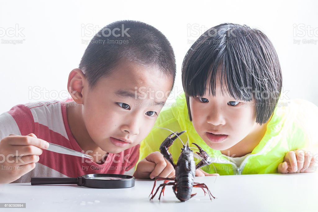 cute  boy and girl  watching a crayfish stock photo