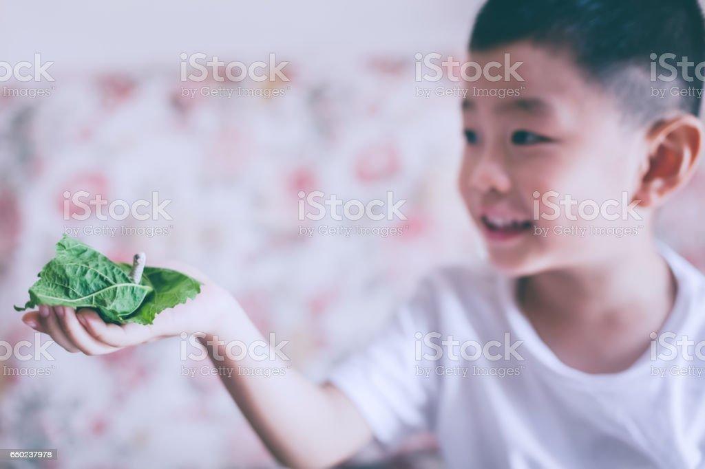 Cute boy holding silkworm stock photo