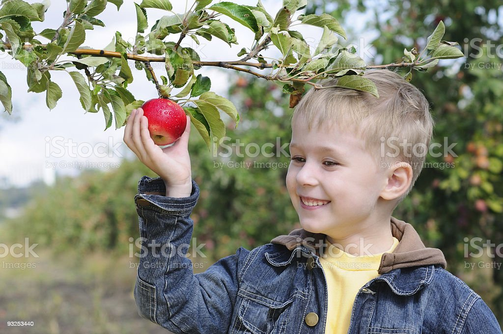 Cute boy in apple orchard royalty-free stock photo