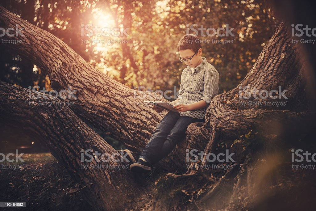 Cute boy reading a book in the park at sunset stock photo