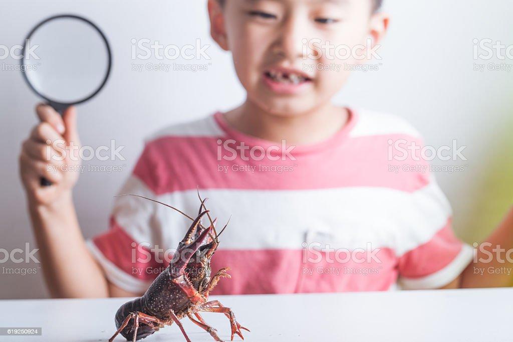 cute  boy watching a crayfish stock photo