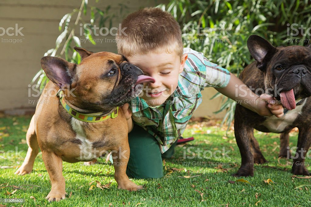 Cute Boy with Affectionate Dogs stock photo