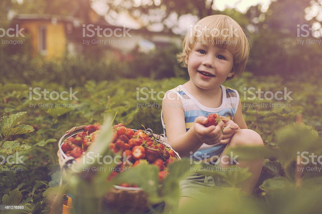 Cute boy with strawberry stock photo