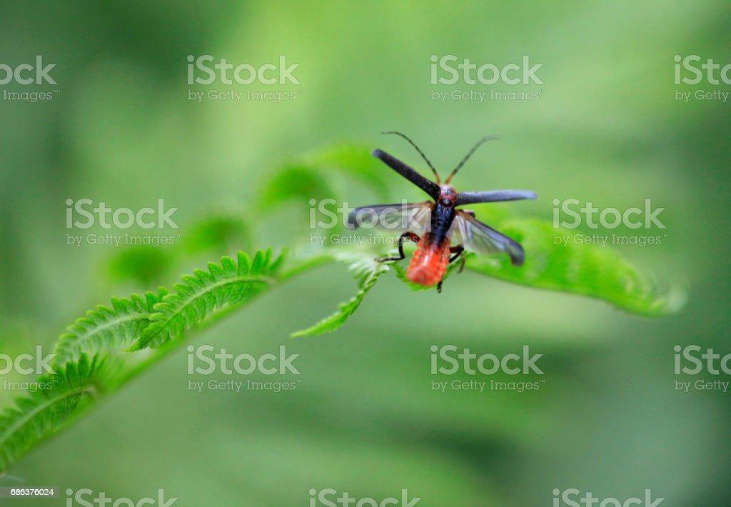 cute bug in spring garden stock photo