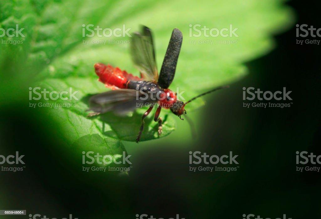cute bug on dandelion stock photo