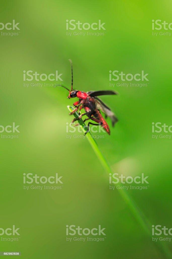 cute bug on green grass stock photo