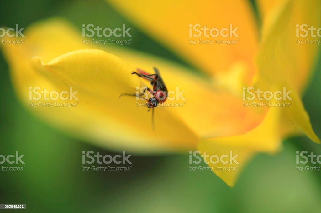 cute bug on yellow tulip stock photo