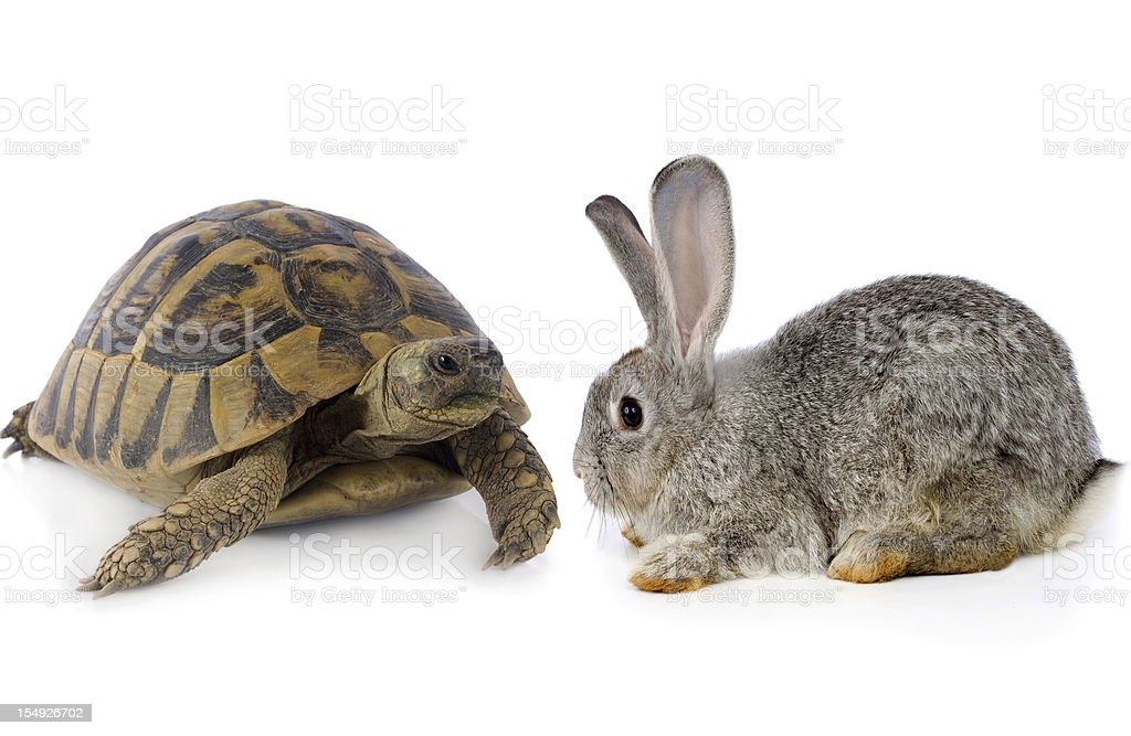 Cute Bunny and Turtle stock photo