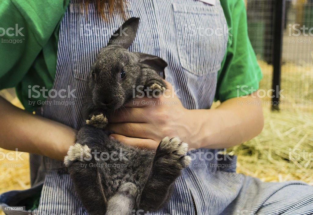 cute bunny at fair stock photo