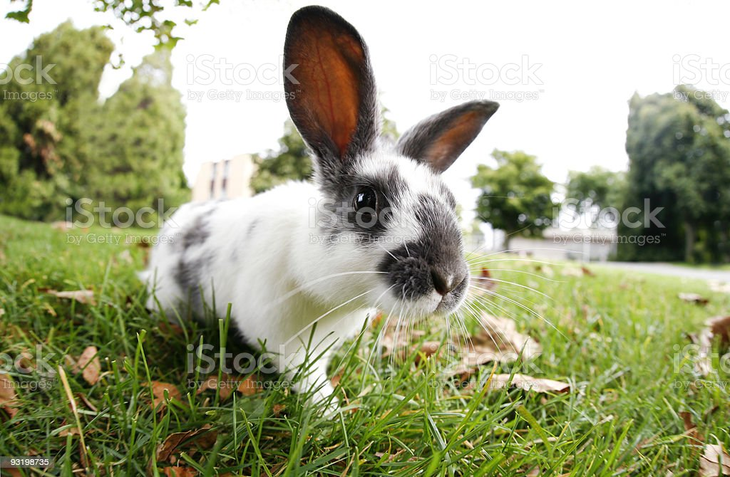 Cute Bunny Outdoors stock photo