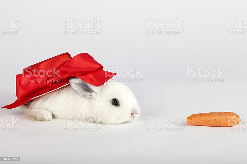 Cute bunny with red hat crawling for a carrot royalty-free stock photo