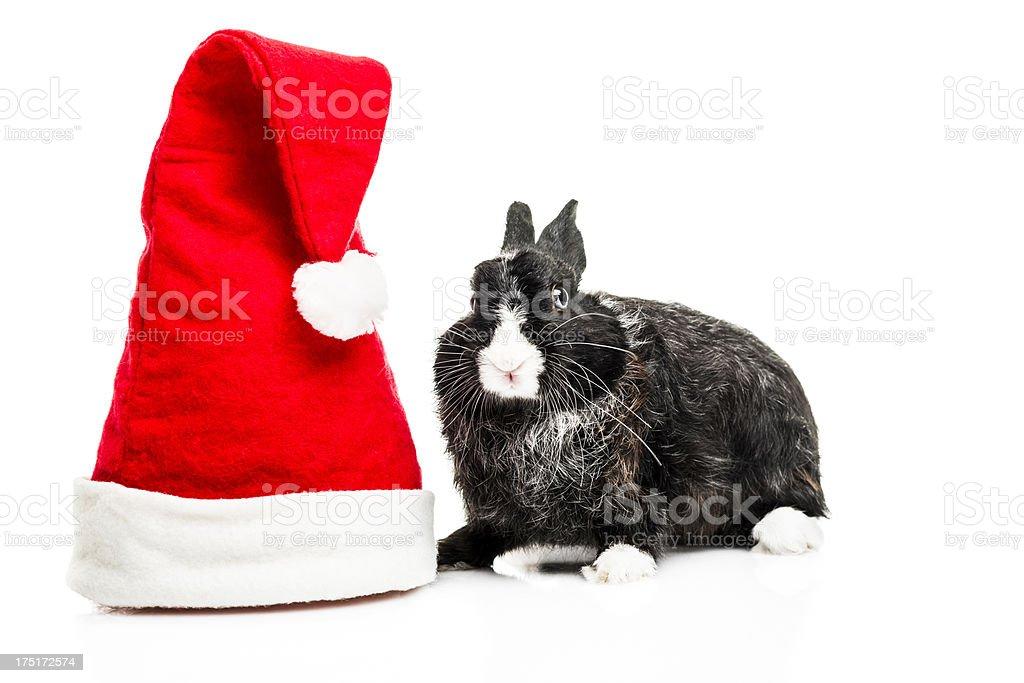 Cute Bunny with Santa Hat royalty-free stock photo