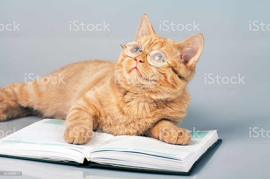 Cute business cat wearing glasses lying on notebook (book) stock photo