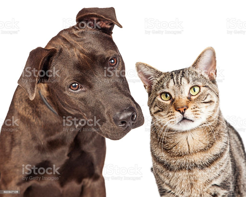 Cute Cat and Dog Closeup Photo stock photo