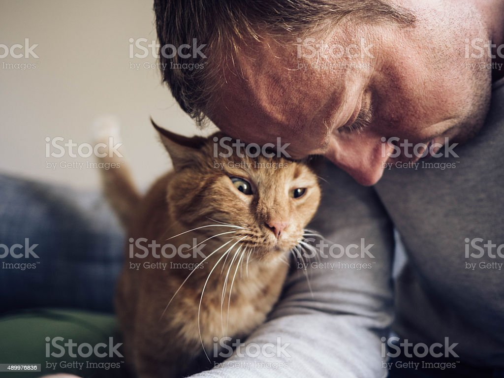 Cute cat and his owner stock photo