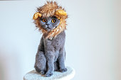 Cute cat dressed up as a lion