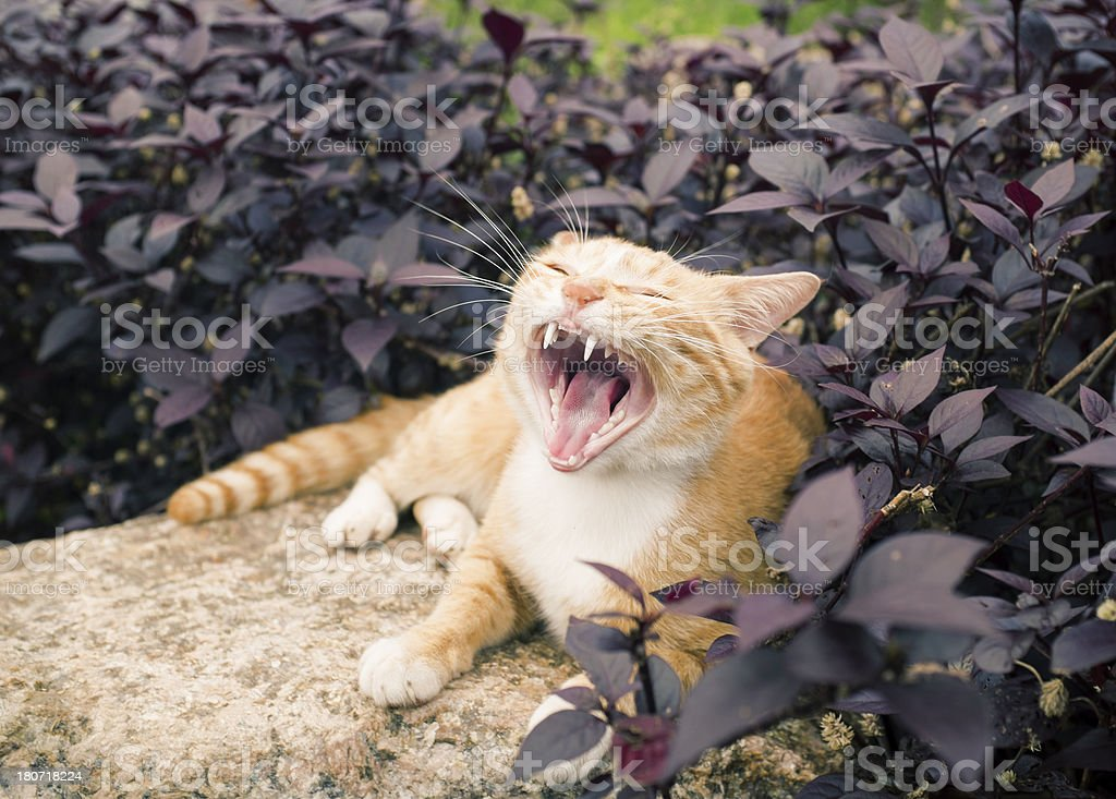 Cute cat enjoying his life royalty-free stock photo