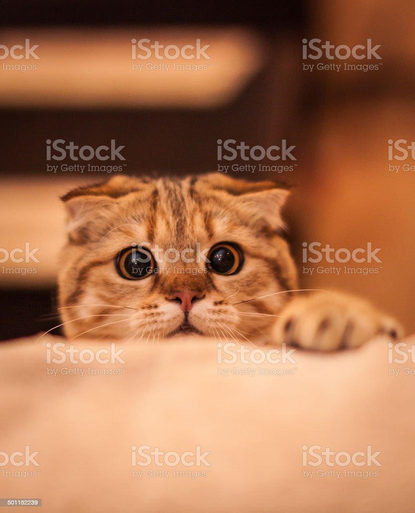 Cute cat enjoying his life stock photo