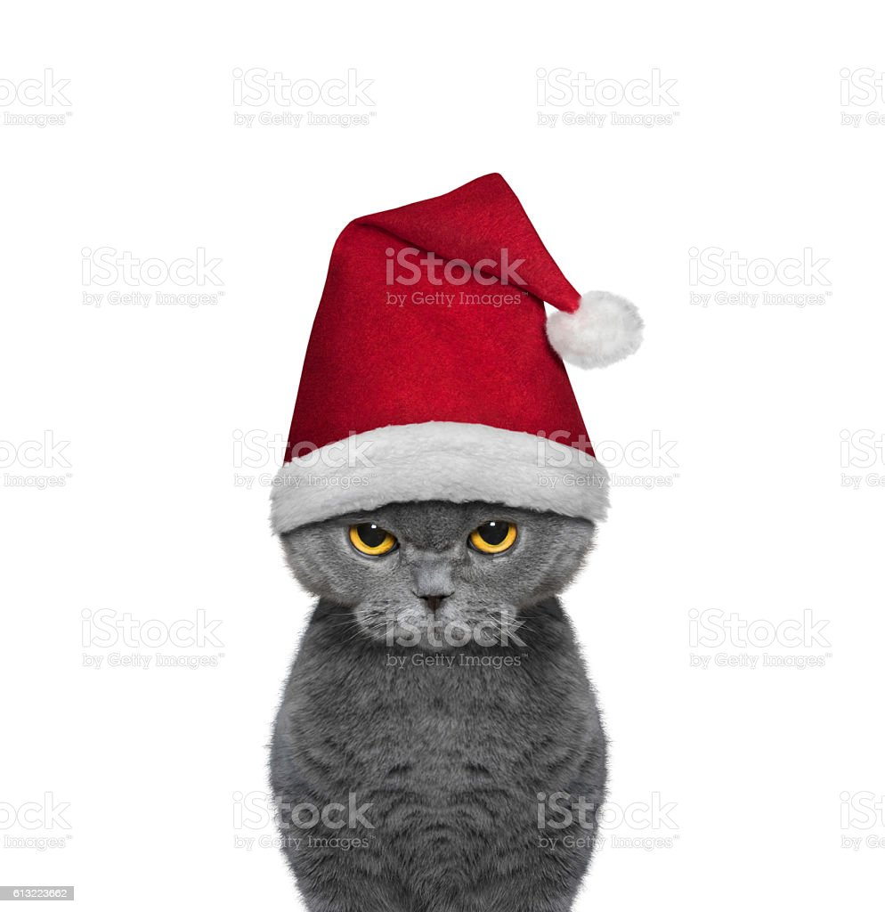 Cute cat in a hat of Santa Claus stock photo