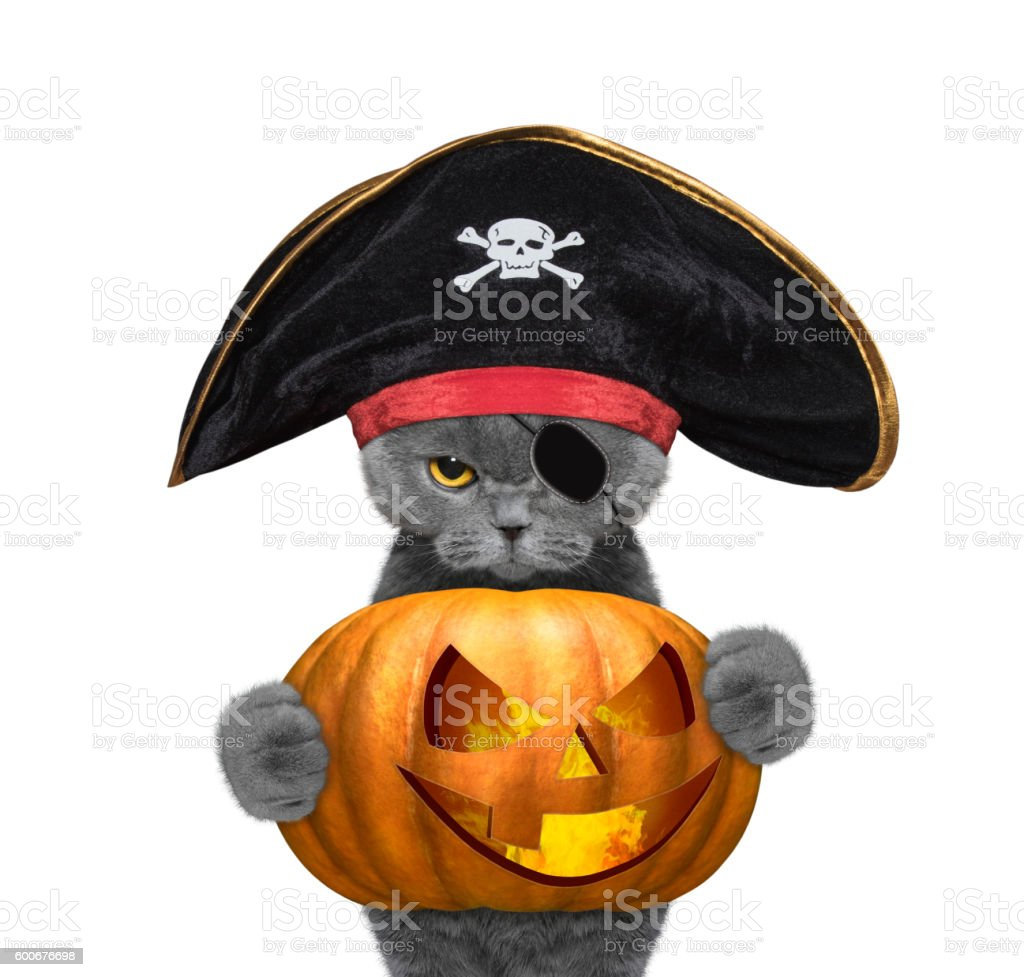 cute cat in a pirate costume with halloweens pumpkin stock photo