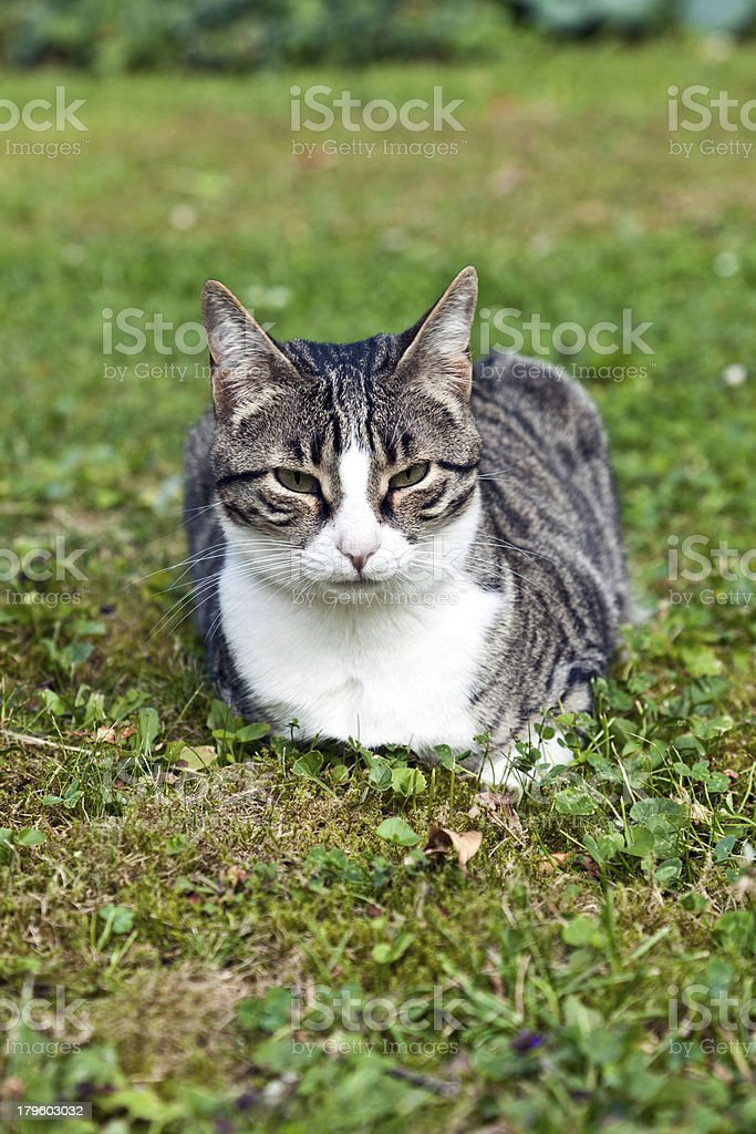 cute cat in the garden royalty-free stock photo