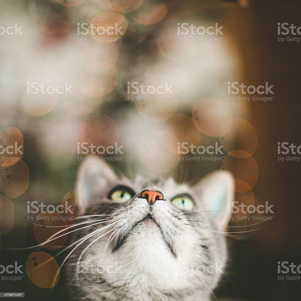 Cute cat looking up stock photo
