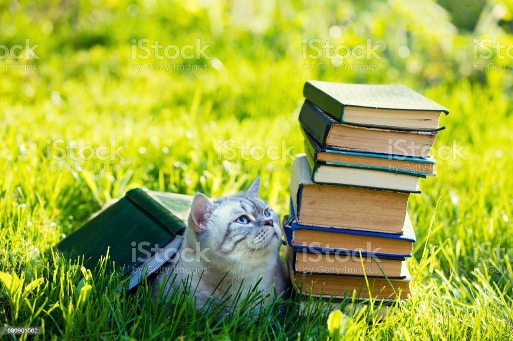 Cute cat lying on the grass near the pile of books. Cat covered with big grunge book stock photo