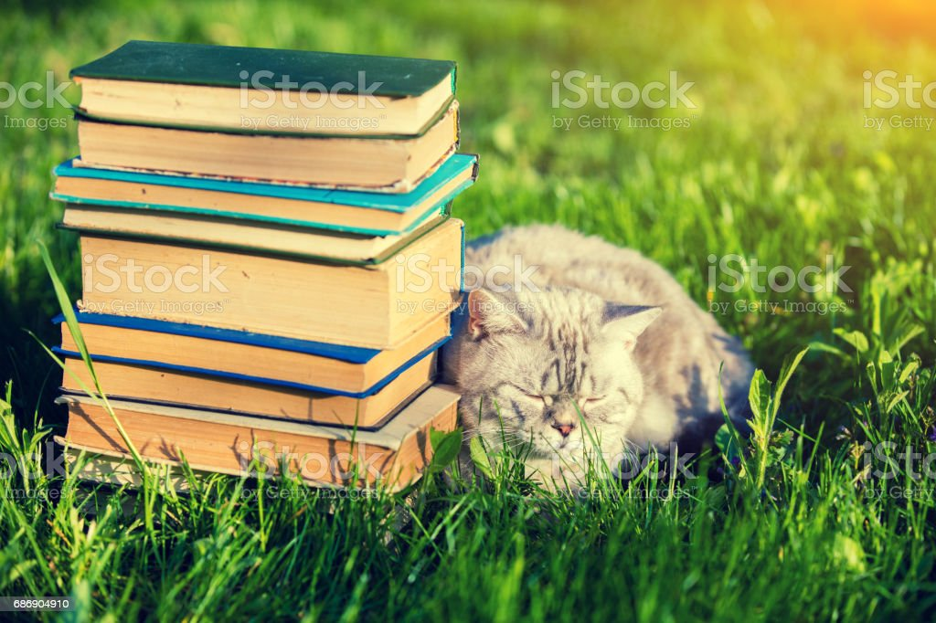 Cute cat lying on the grass near the pile of books. stock photo