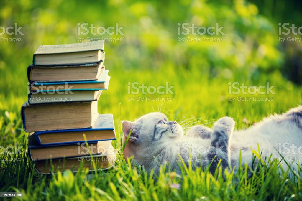 Cute cat lying on the grass on the back near the pile of books. stock photo