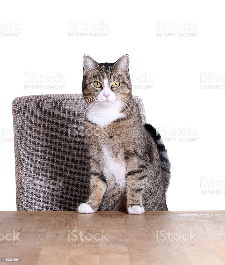 cute cat on table stock photo