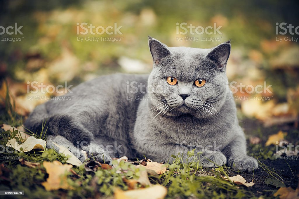 Cute cat oudoors stock photo