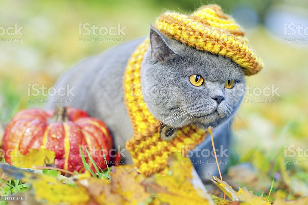 Cute cat oudoors royalty-free stock photo