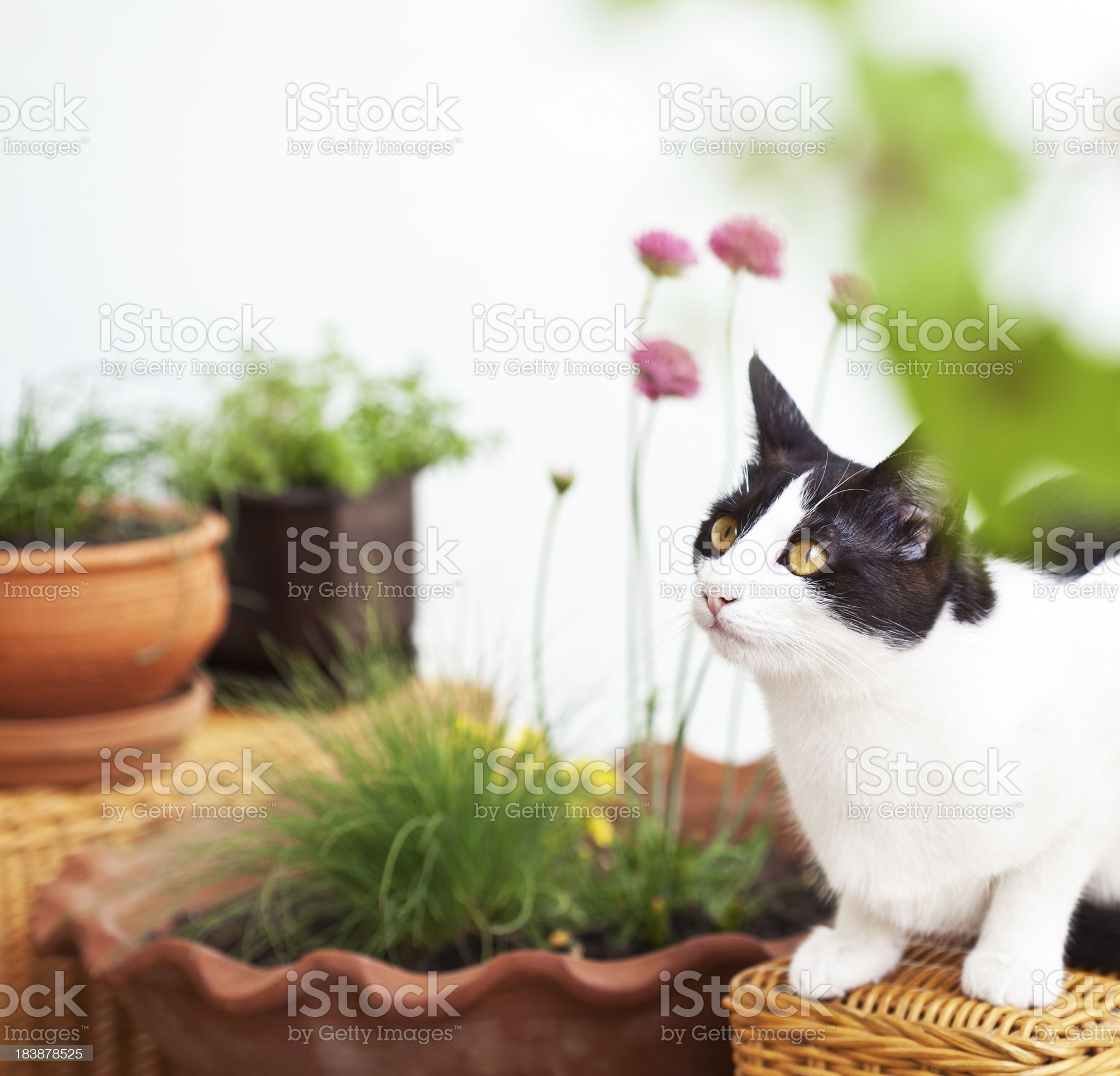 Cute cat outdoors royalty-free stock photo