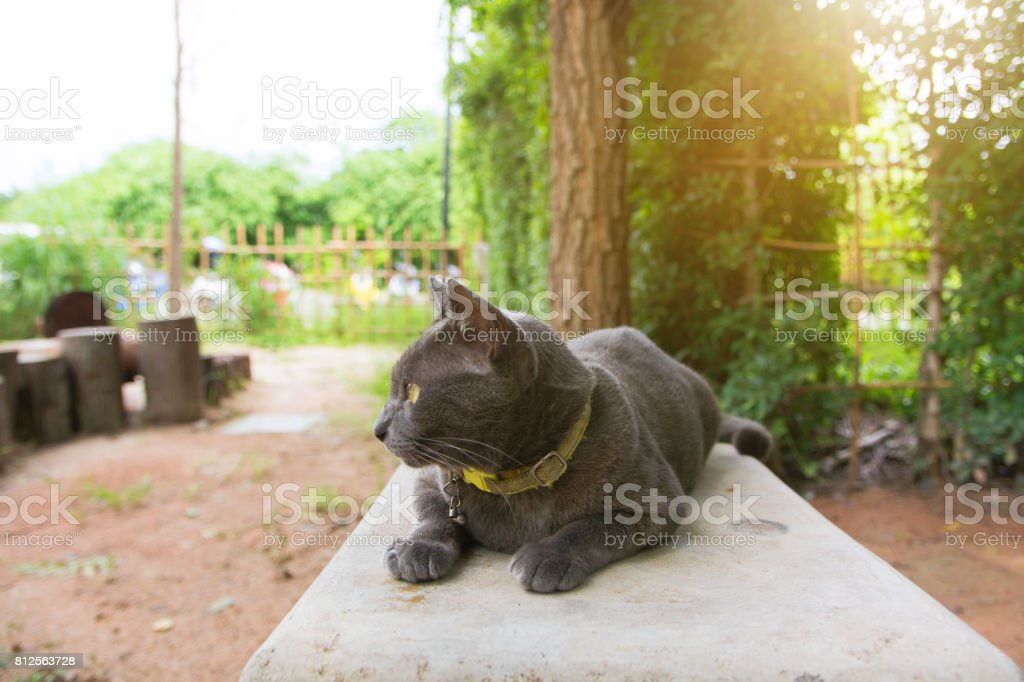 Cute Cat stock photo