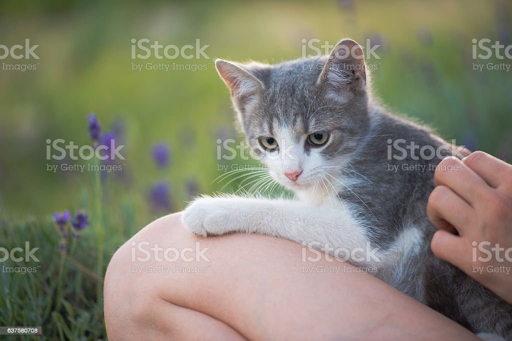 Cute cat purring outdoor with young child stock photo
