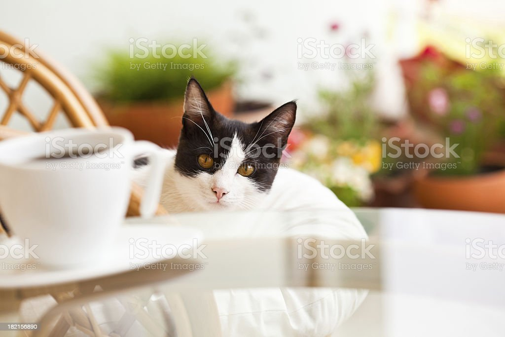 Cute cat resting on the chair royalty-free stock photo
