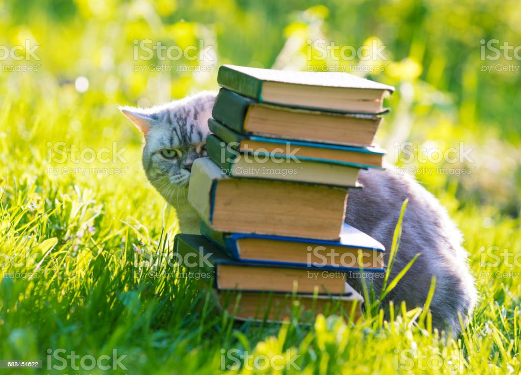 Cute cat sitting on a grass and hiding behind a pile of books. stock photo