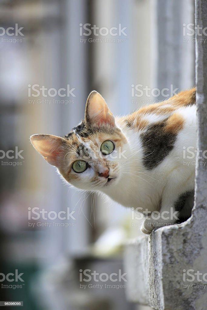 A Cute cat sitting on the windowsill royalty-free stock photo