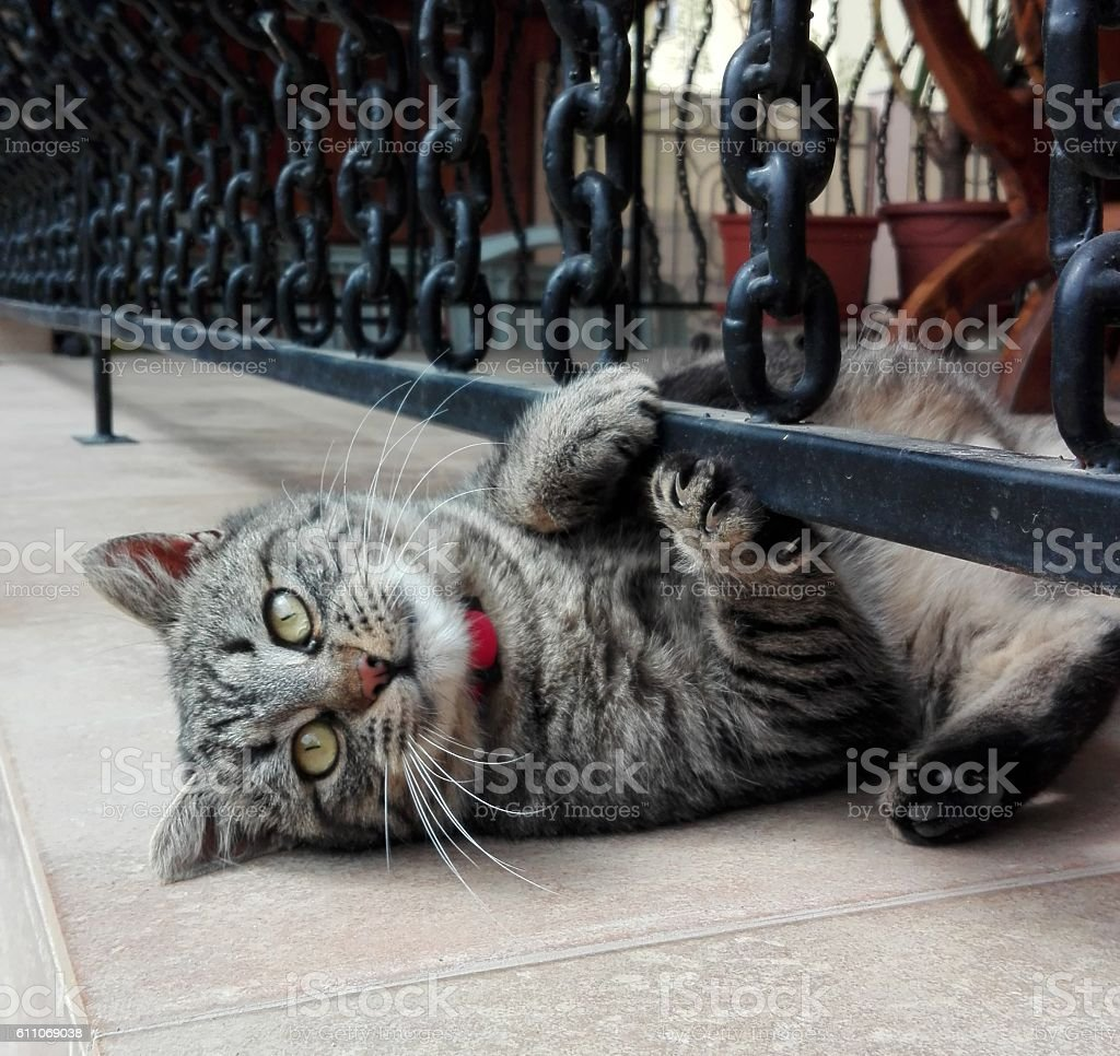 cute cat with stripes posing stock photo