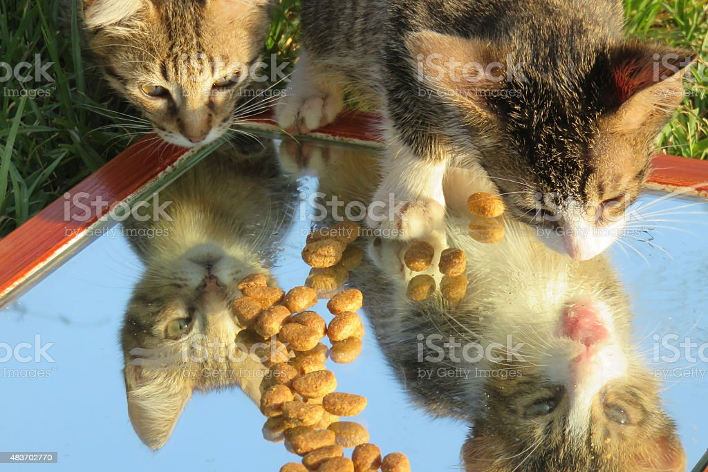 Cute cats standing on Mirror stock photo
