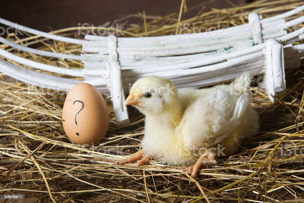 cute chicken next to the egg with question mark stock photo