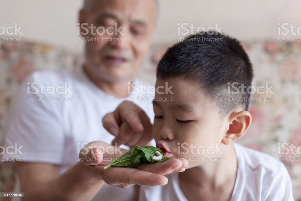 Cute child kissing silkworm stock photo