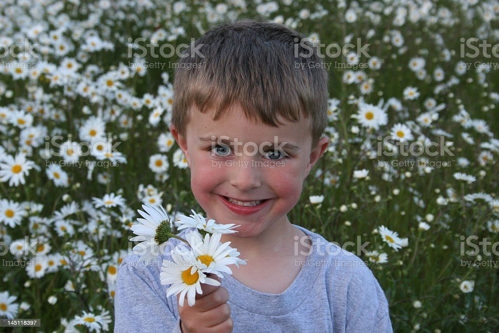 Cute child offering daisies royalty-free stock photo