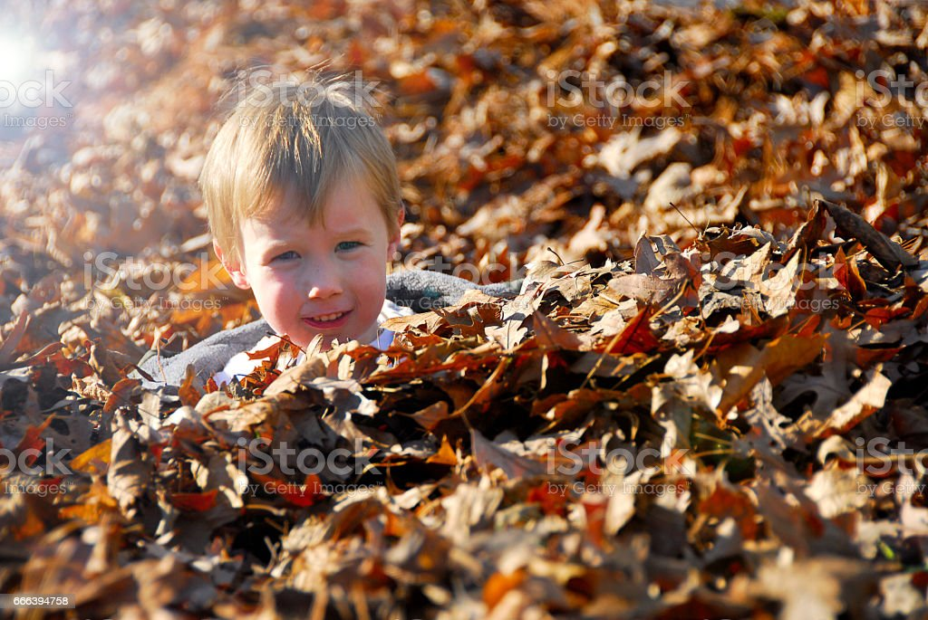 Cute Child Playing in the Fall Leaves stock photo