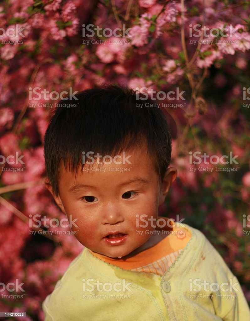 cute Chinese girl royalty-free stock photo